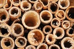 Hintergrund von Bambusstöcken Stockbild