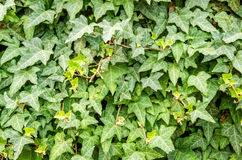 Hintergrund von Blättern Stockfoto