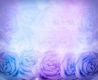 Hintergrund von blauen Rosen Lizenzfreies Stockfoto