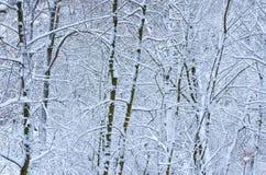 Hintergrund von bloßen Bäumen im Winter stockfotografie