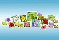 Hintergrund von Blumenfotos Stockbild