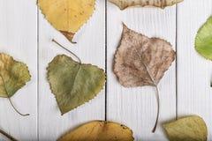 Hintergrund von den Blättern Lizenzfreie Stockfotografie