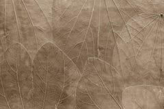 Hintergrund von den Blättern der blassen braunen Farbe Stockfotos
