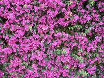 Hintergrund von den Blumen Stockfoto