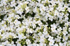Hintergrund von den Blumen Stockfotos