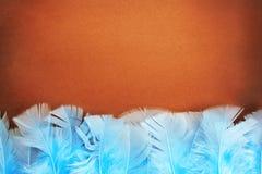 Hintergrund von den Federn. stockfotos