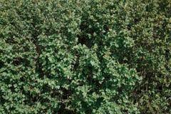 Hintergrund von den grünen Federblättern stockbilder