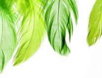 Hintergrund von den hellgrünen Federn auf einem Weiß lokalisiert Lizenzfreie Stockfotos