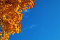 Hintergrund von den Herbstahornblättern und vom blauen transparenten Himmel lizenzfreies stockbild