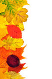 Hintergrund von den Herbstblättern Stockbild