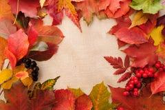 Hintergrund von den Herbstblättern Stockfoto
