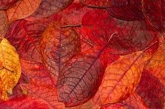 Hintergrund von den Herbstblättern Stockfotografie