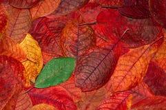 Hintergrund von den Herbstblättern Lizenzfreie Stockbilder