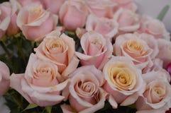 Hintergrund von den identischen rosa Rosen lizenzfreies stockfoto