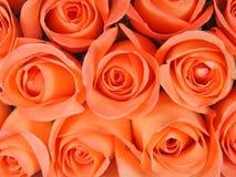 Hintergrund von den korallenroten Rosen Lizenzfreies Stockfoto