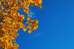 Hintergrund von den orange Ahornblättern und vom blauen hellen Himmel lizenzfreie stockfotografie