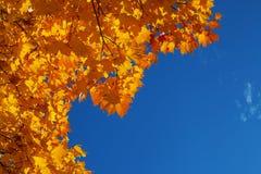 Hintergrund von den orange und gelben Herbstahornblättern und vom blauen hellen Himmel stockfoto