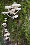 Hintergrund von den Pilzen stockbild