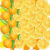 Hintergrund von den runden orange Scheiben mit saftigem spritzt stock abbildung