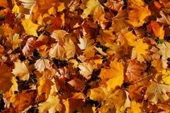 Hintergrund von den schönen Blättern des Herbstes im hellen Licht der Sonne lizenzfreie stockbilder