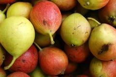Hintergrund von der reifen Fruchtbirne Reife Fruchtbirnenernte stockfotos
