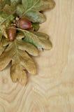 Hintergrund von Eicheln mit Blättern auf Holz Stockfotografie