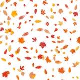 Hintergrund von farbigen nassen herbstlichen Ahornblättern ENV 10 stock abbildung
