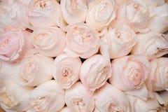 Hintergrund von frischen hellrosa Rosen Blumenbeschaffenheit Stockfotografie