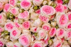 Hintergrund von frischen hellrosa Rosen Blumenbeschaffenheit Stockbild
