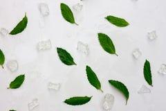 Hintergrund von frischen tadellosen Blättern und von Eis Flache Lage, Draufsicht lizenzfreie stockbilder