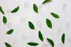 Hintergrund von frischen tadellosen Blättern und von Eis Flache Lage, Draufsicht stockfoto