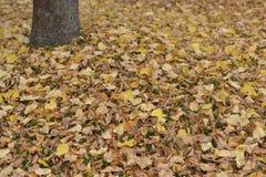 Hintergrund von gefallenen trockenen Blättern Stockfotos