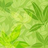 Hintergrund von grünen Blättern Lizenzfreie Stockbilder
