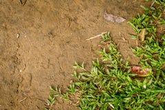 Hintergrund von Grünpflanzen und von Bodensand Lizenzfreies Stockfoto