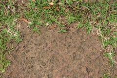 Hintergrund von Grünpflanzen und von Bodensand Lizenzfreie Stockfotografie