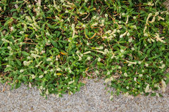Hintergrund von Grünpflanzen und von Bodenstein Stockbild