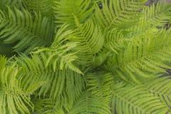 Hintergrund von großen lederartigen Blättern 2 Stockfotografie