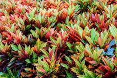 Hintergrund von herbstlichen Blättern Stockfoto