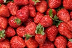Hintergrund von kürzlich geernteten Erdbeeren Lizenzfreie Stockfotografie