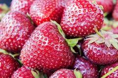 Hintergrund von kürzlich geernteten Erdbeeren Stockbild