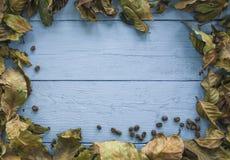 Hintergrund von Kaffeeblättern und -samen Lizenzfreies Stockfoto