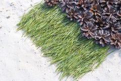 Hintergrund von Kiefernnadeln auf dem Sand mit Kegeln Lizenzfreie Stockfotografie
