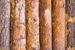 Hintergrund von Kiefernplatten mit Barke stockfotos