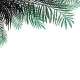 Hintergrund von Kokosnusszweigen auf weißem Hintergrund, Palmen Botanische Illustration des Vektors, Elemente für Design Stockfotografie