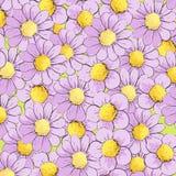 Hintergrund von lila Gänseblümchen Stockfoto