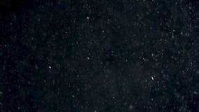 Hintergrund von natürlichen sich hin- und herbewegenden Staubteilchen stock footage