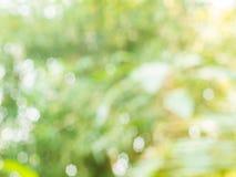Hintergrund von natürliches Licht bokeh Stockbilder