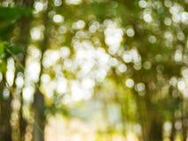 Hintergrund von natürliches Licht bokeh Stockfotografie
