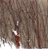 Hintergrund von Niederlassungen im Winter Stockfoto