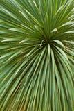 Hintergrund von Palmblättern Stockfoto